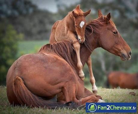 Beliebt Jeux de chevaux rigolo - Le meilleur jeu de cheval MP57