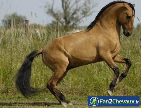 Un cheval baroque :