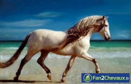 Comment reconnaitre un cheval ibérique? :