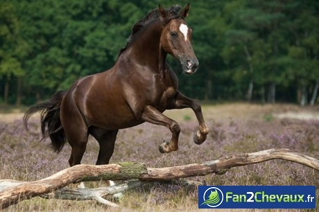 Un saut de cheval sauvage :