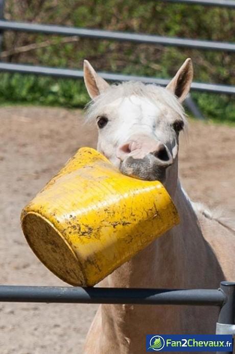 Comment savoir si un cheval à faim? :