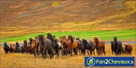 Fonds d'écran chevaux sauvages en automne : Chevaux sauvages