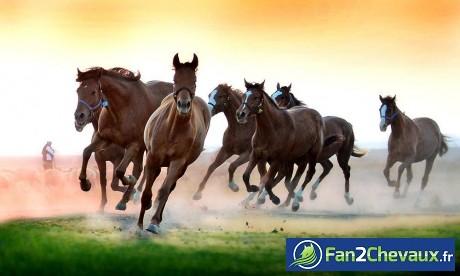 Des chevaux sauvages comme dans un rêve : Chevaux sauvages