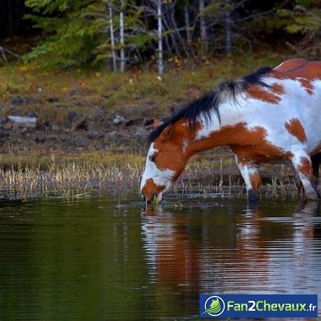 Comment se nourrit un cheval sauvage? : Chevaux sauvages