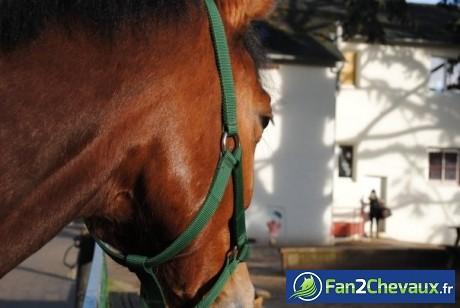 Le regard d'un cheval peut en dire loin  : Chevaux divers