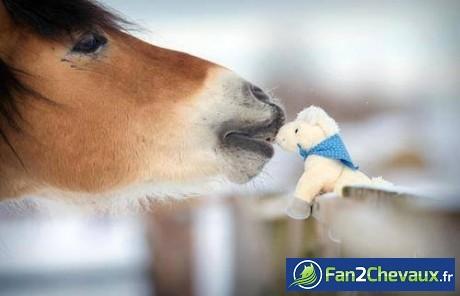 Bisous de cheval : Chevaux sauvages