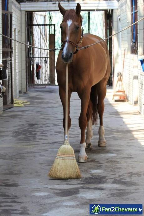Quand un cheval passe le balai :