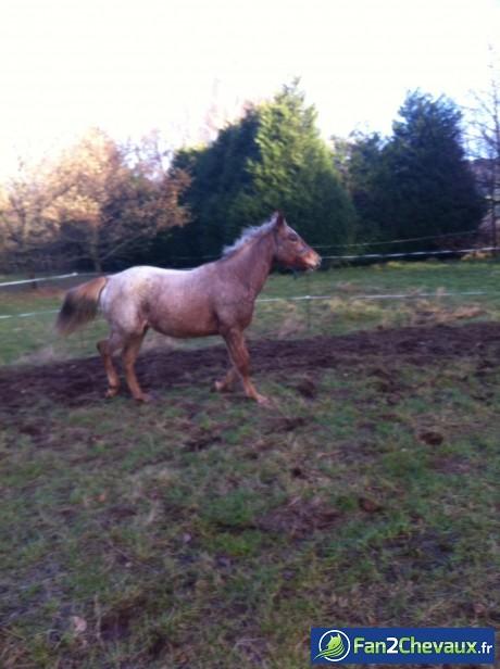 Esperanza  : Mon cheval