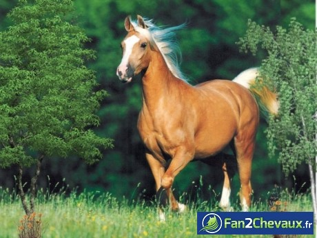 Une photo de chevaux :