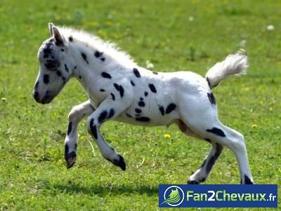 Poney ou Dalmatien? : Poneys
