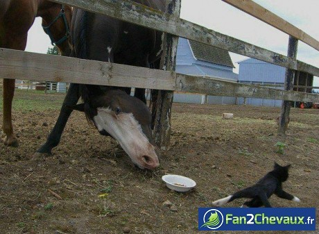 Un cheval a faim : Fun