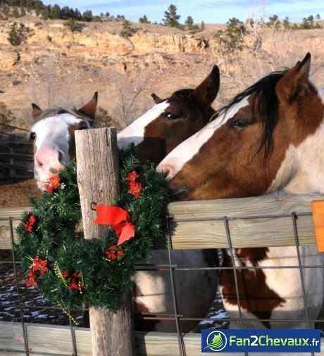 Le noel des chevaux : Fun