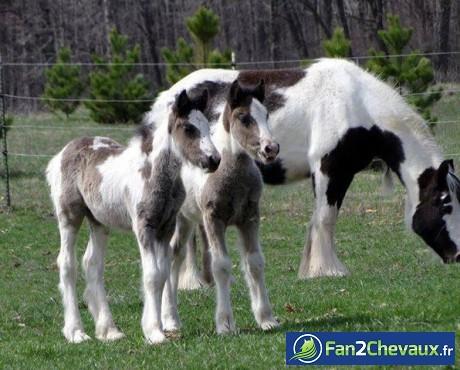 Calendrier de l'avent chevaux : Poulains