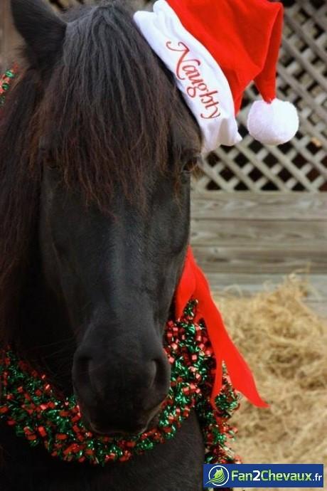 Joyeux noel les fans de chevaux :