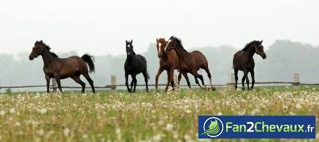 Des chevaux dans un champs :