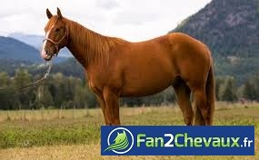 Mon cheval : Mon cheval