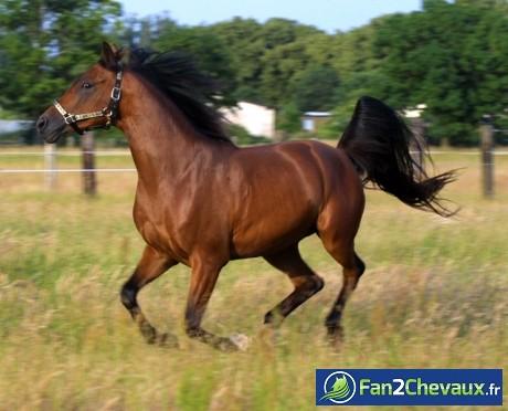 Et voilà le père : Mon cheval