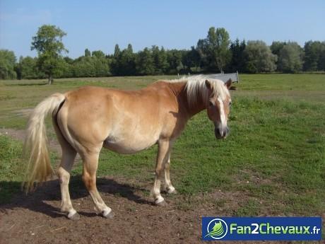 Voila mon cheval western : Mon cheval