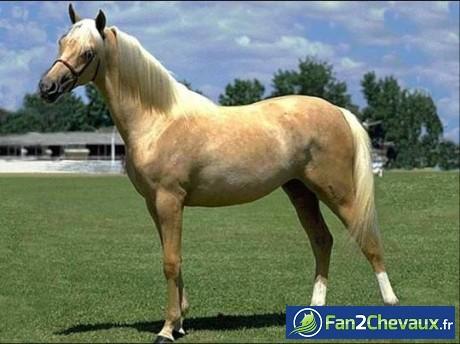 Et un nouveau cheval pour mon centre équestre :