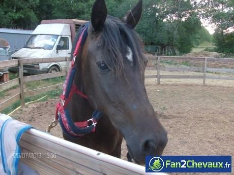 Prunella mon amour de cheval :