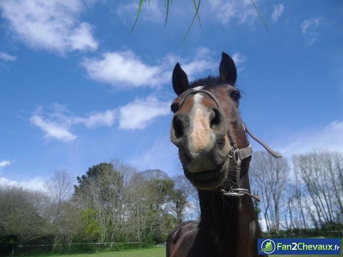 Ruhal : Les plus belles photos de chevaux