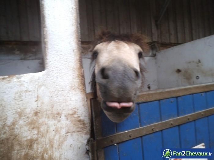 Hey toi, oui toi! Regarde comme j'ai une belle langue!  : Photos rigolotes de chevaux