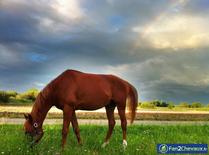 Tahinao digne d'une carte postale : Photos du cheval des membres