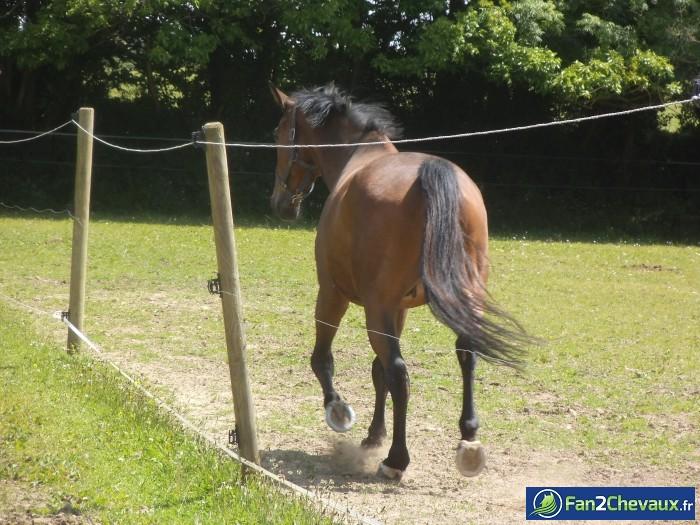 Du trot en pleins soleil! :-) : Photos de chevaux sauvages