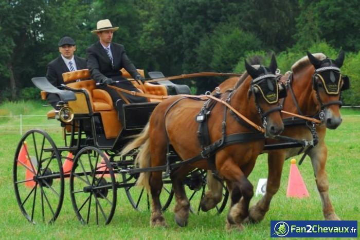 Attelage de Spirit et Sauvage : Photos de chevaux de trait