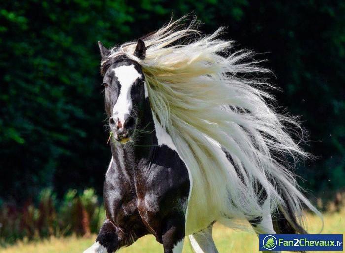 Quelle belle crinière blanche : Les plus belles photos de chevaux