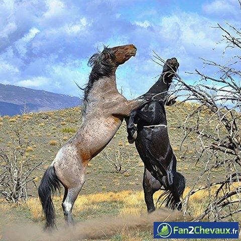 Belle photo de deux rivaux : Les plus belles photos de chevaux