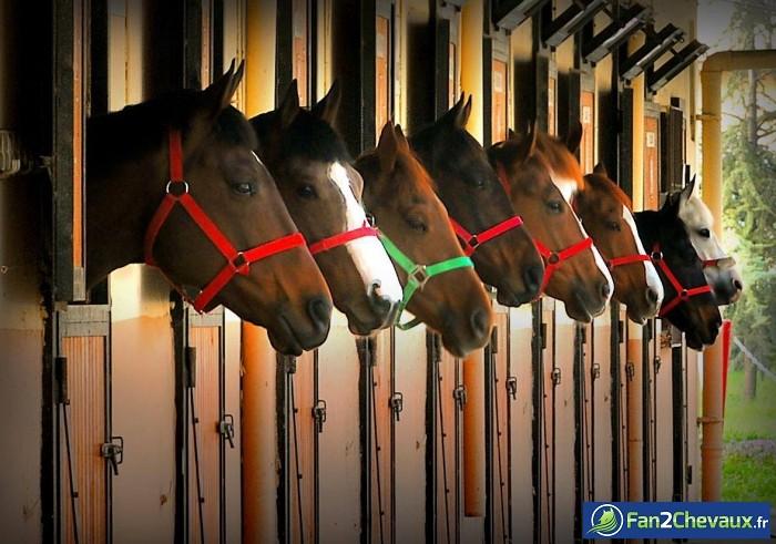A l'écurie : Photos rigolotes de chevaux