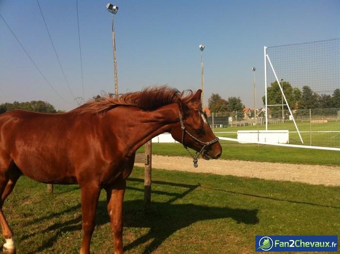 Tahinao qui fait le fou au pré : Photos du cheval des membres