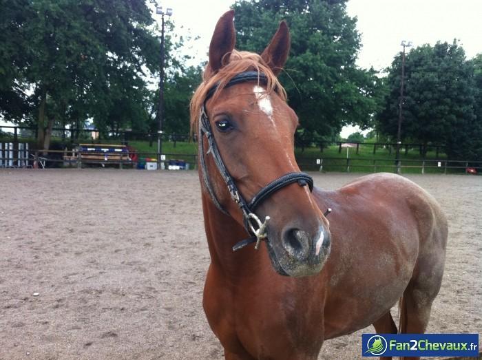 Mais tu est tout sale...(tahinao) : Photos du cheval des membres