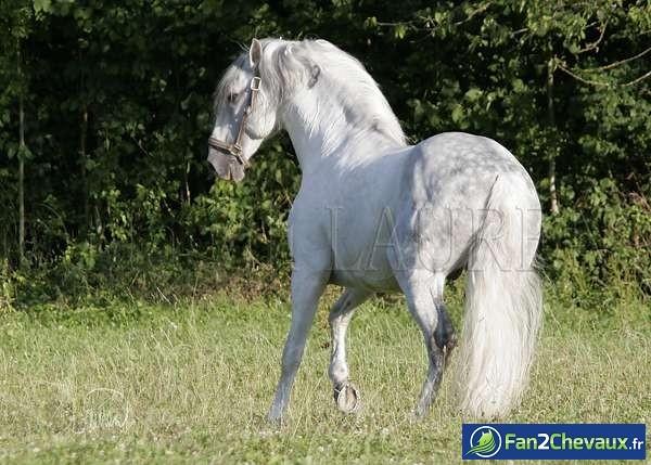 J'adore les ibériques : Photos de chevaux iberiques