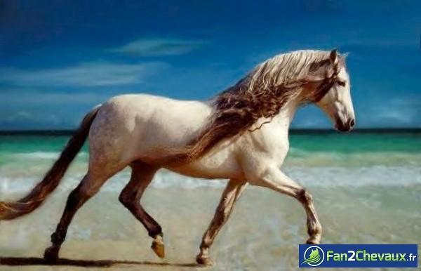 Comment reconnaitre un cheval ibérique? : Photos de chevaux iberiques