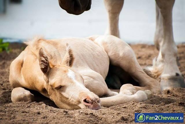 Dur réveil pour un poulain : Photos de poulains