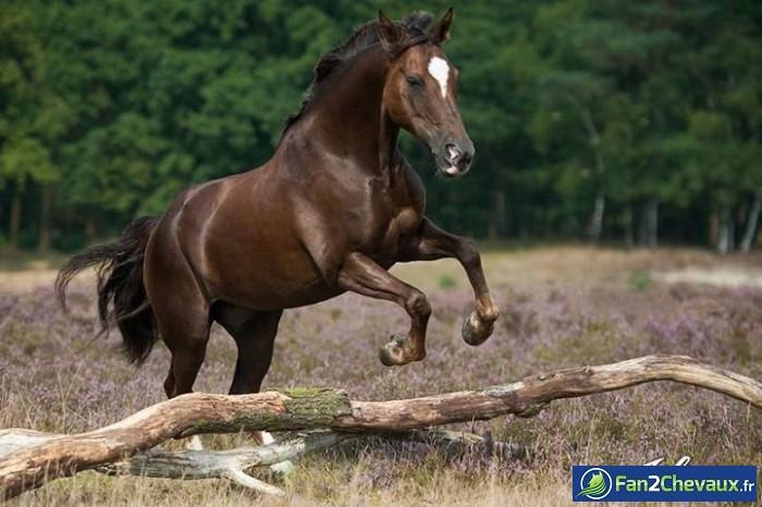 Un saut de cheval sauvage : Photos de chevaux sauvages