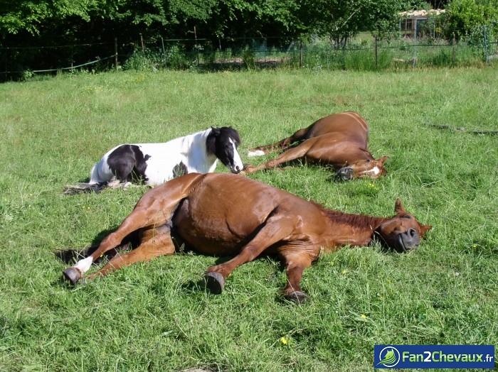 TROP DUR LA VIE : Photos du cheval des membres