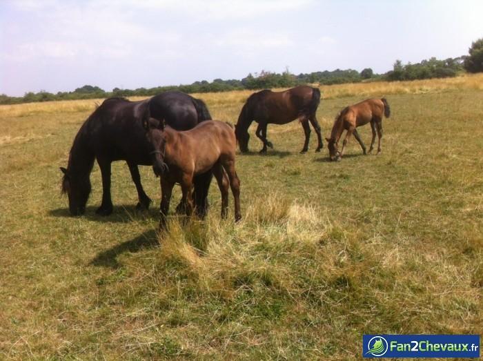 Réunion de famille : Photos du cheval des membres