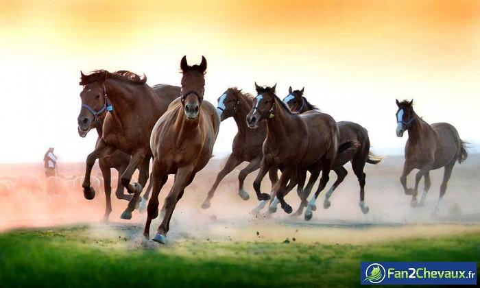Des chevaux sauvages comme dans un rêve : Photos de chevaux sauvages