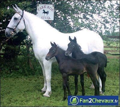Ou est le papa? : Photos de balades à cheval