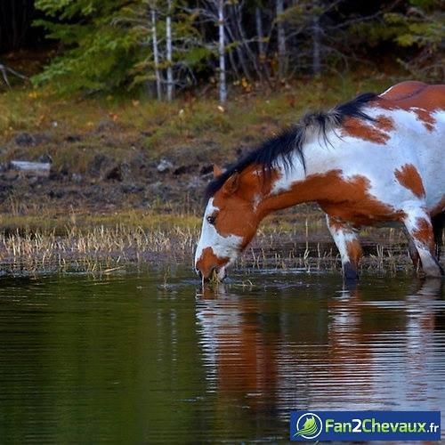 Comment se nourrit un cheval sauvage? : Photos de chevaux sauvages