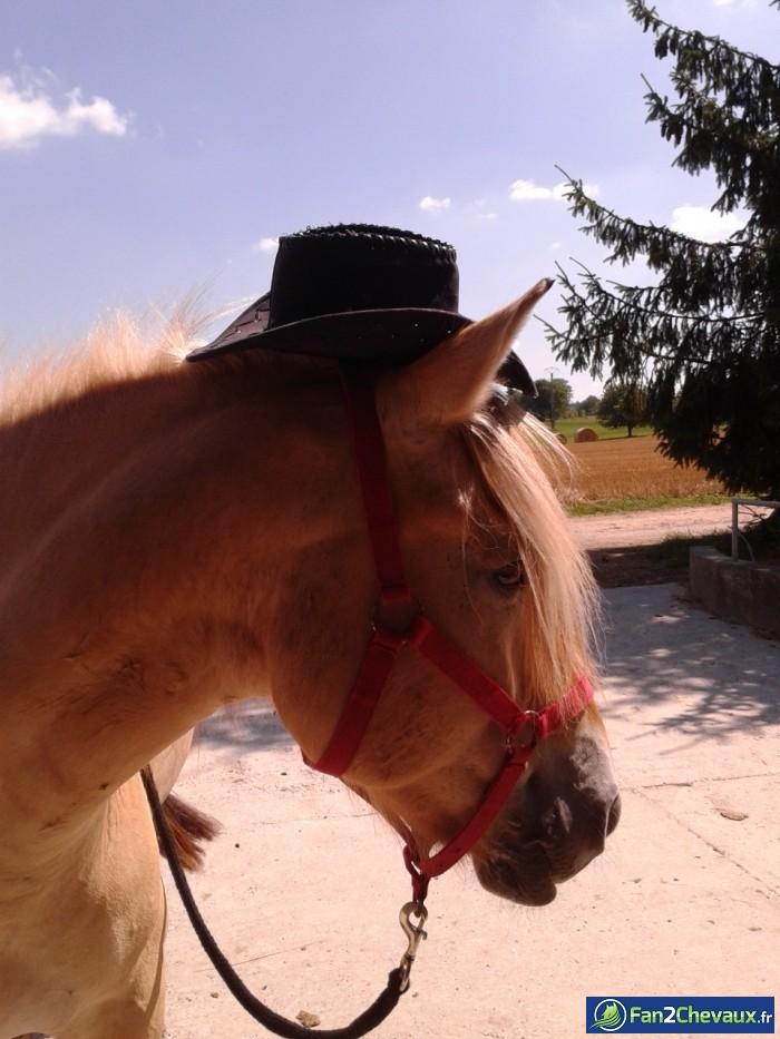 Monsieur Buster ^^ : Photos rigolotes de chevaux