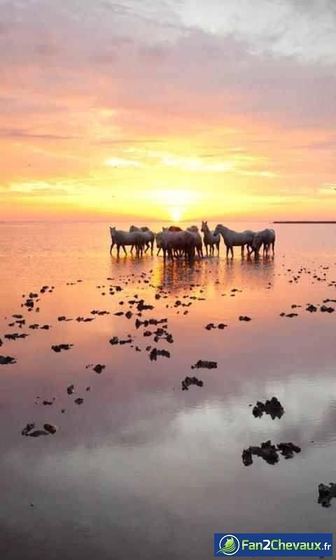 Des chevaux pendant un couché de soleil : Photos de chevaux sauvages