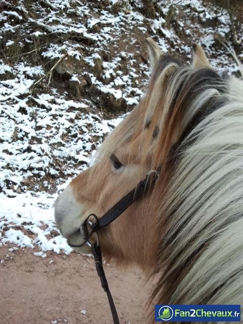 balade sous la neige l'hiver dernier :) : Photos de balades à cheval