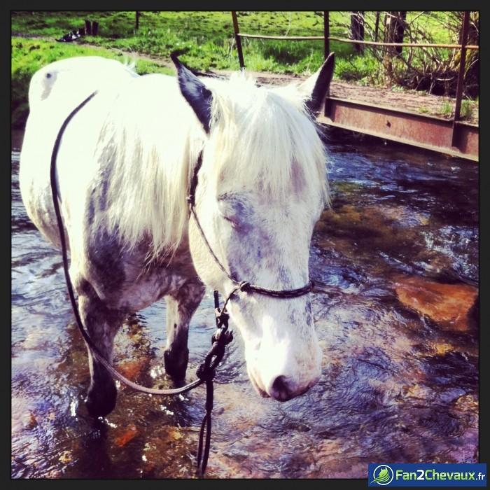 L'heure de la sieste a sonnée !! : Photos du cheval des membres