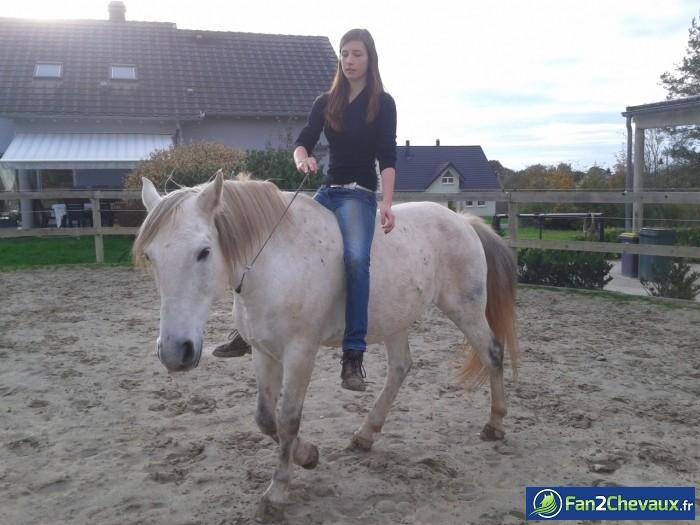 Travail en liberté acru :) : Les plus belles photos de chevaux