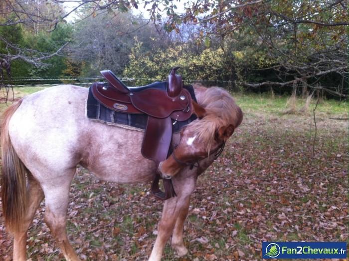C'est quoi ce truc ?  : Photos du cheval des membres