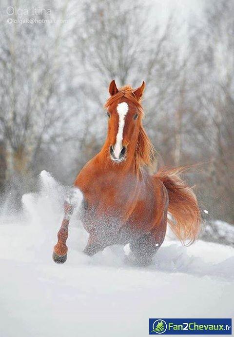 Sous la neige : Photos rigolotes de chevaux